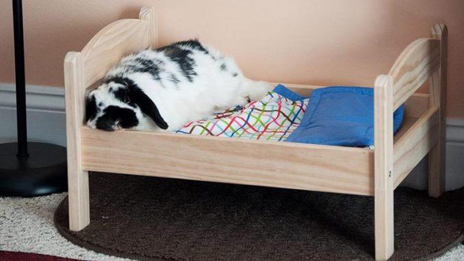 Что нужно купить для кролика