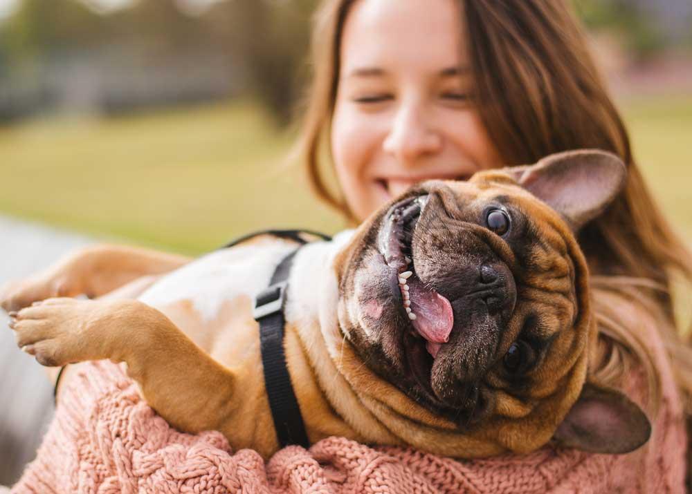 Как открыть клуб собаководства