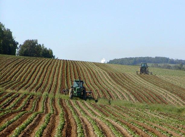 Элитный картофель способы высокоурожайного выращивания
