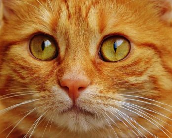 Во сне гладить рыжего кота