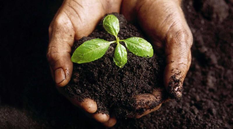Выращивание дождевых червей как бизнес