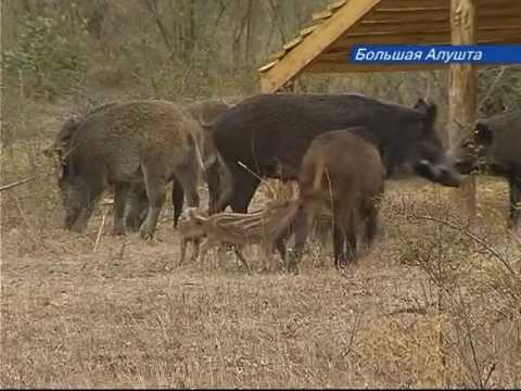 Разведение диких животных как бизнес