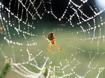 Увидеть паука в доме вечером