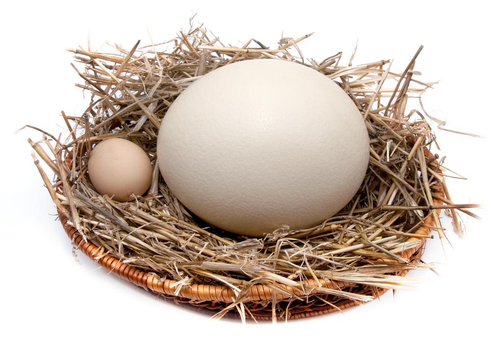 Куриные и перепелиные яйца сравнение
