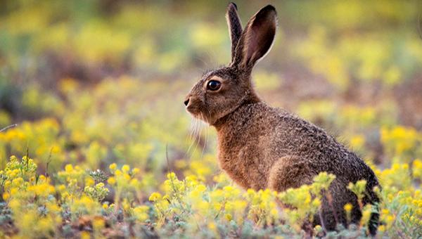 Что говорят зайцы