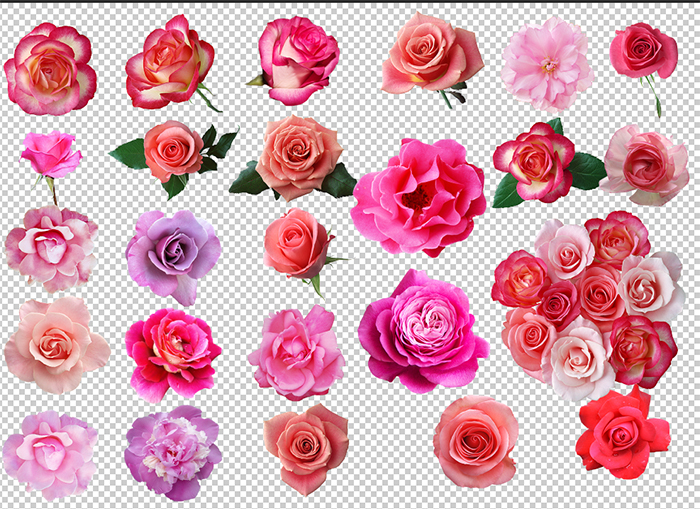 Images of pink rose