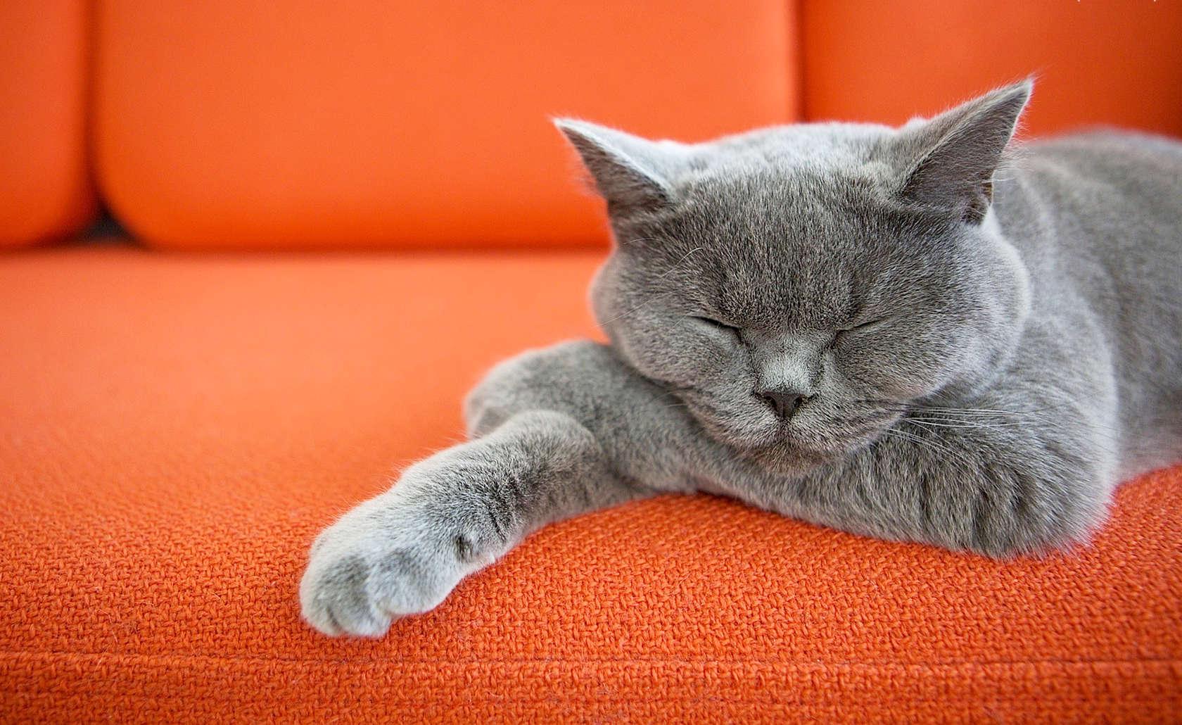 Как убрать с дивана запах мочи кота