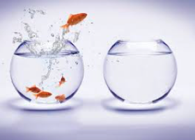 Fish jumping out of bowl