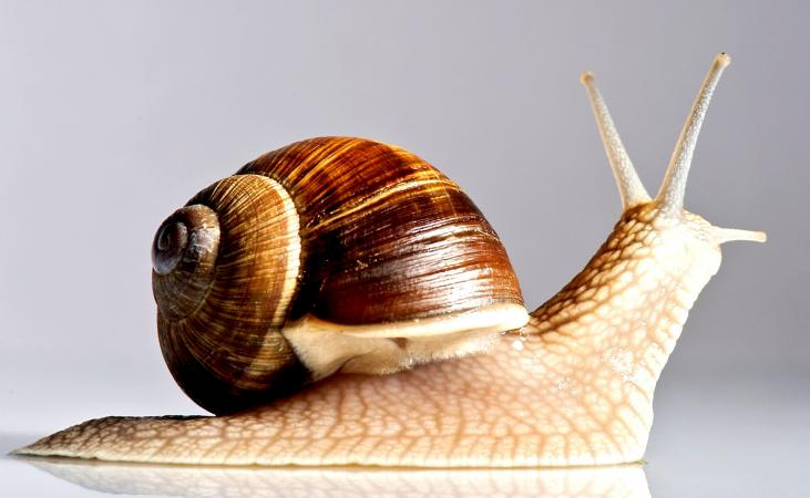 Facts on snails for kids