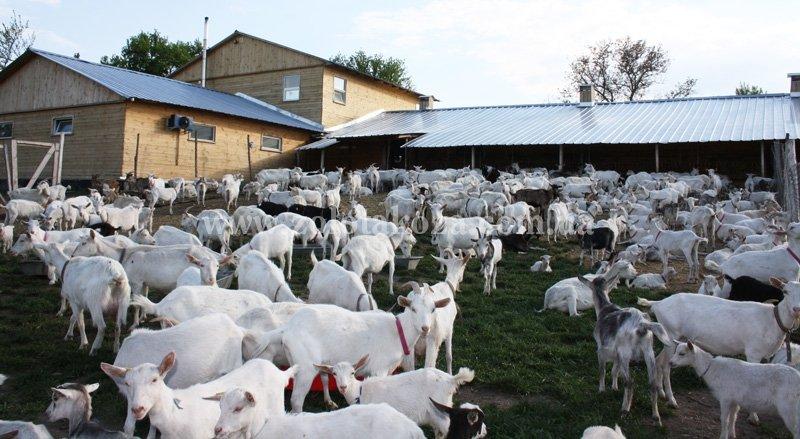 Ферма для коз проект