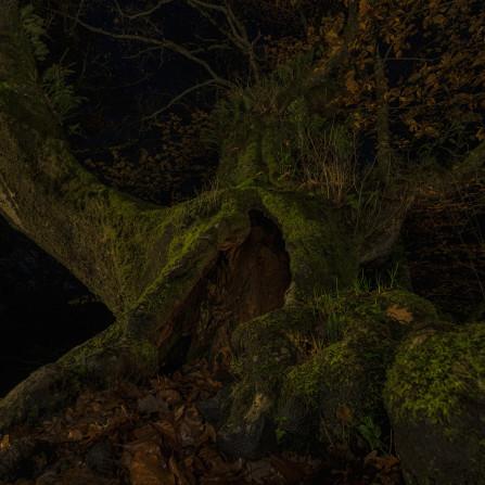 Gigante del Bosque