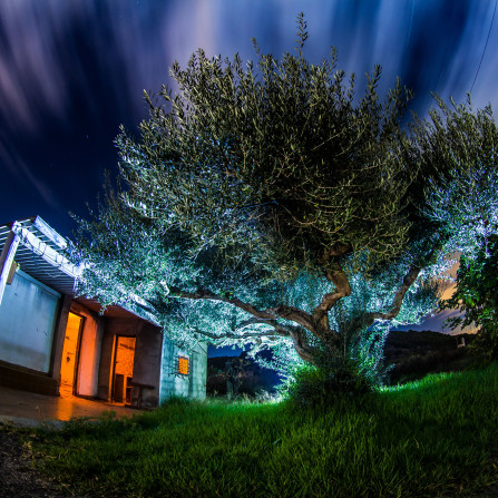 The tree of bad dreams