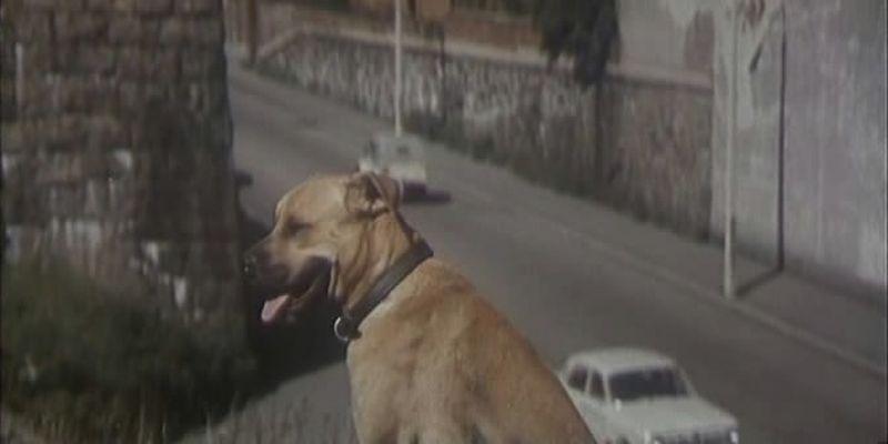 Дублер фильм собака порода