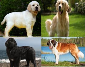 Собаки самые добрые породы