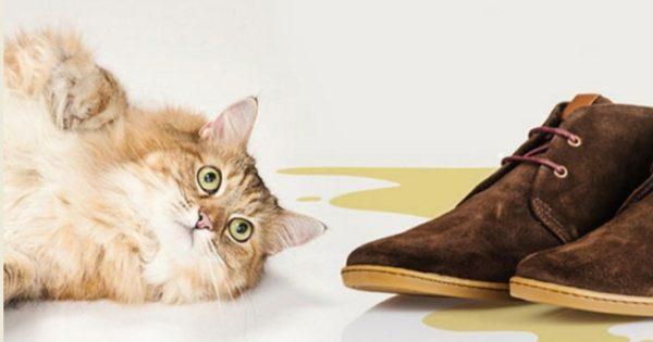 Удаление запаха от кошачьей мочи — дело трудное, но возможное