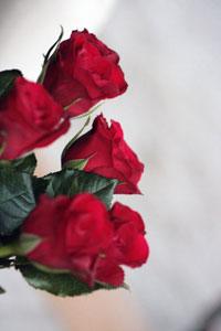 Бизнес на розах рентабельность в домашних условиях