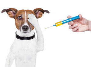 Когда щенкам делать прививку