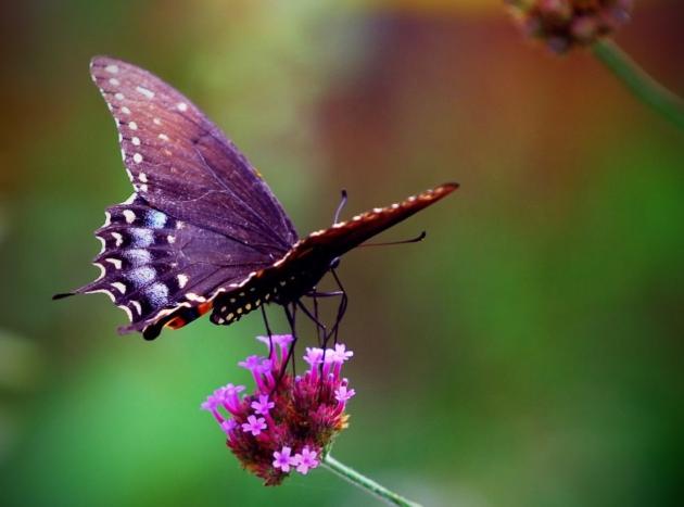 Сонник значение бабочки