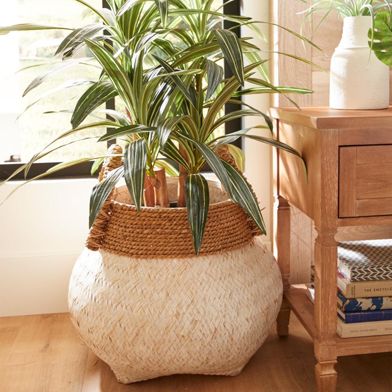 Artificial Massangeana Plant in Pot