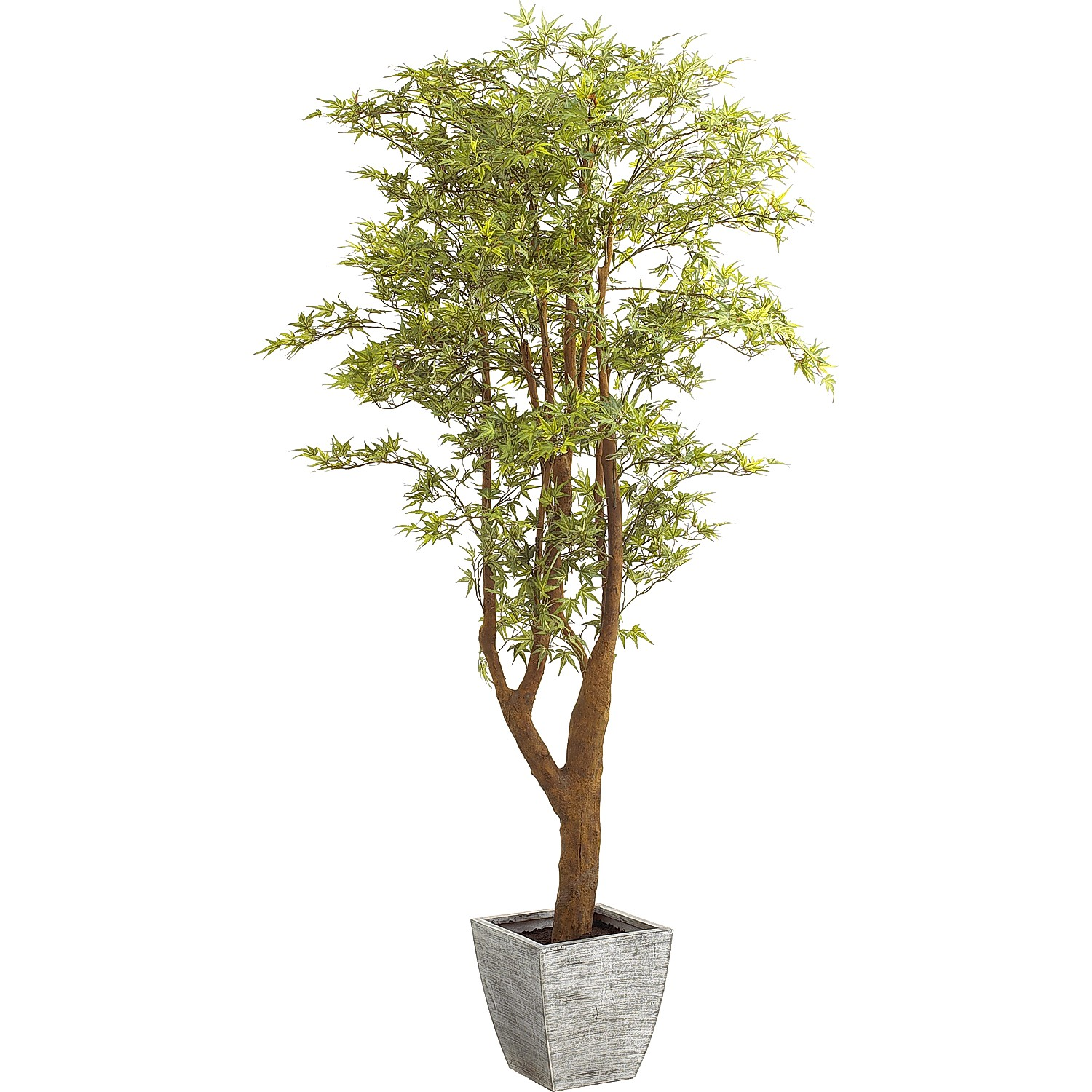 6' Artificial Japanese Maple Tree in Silver Pot