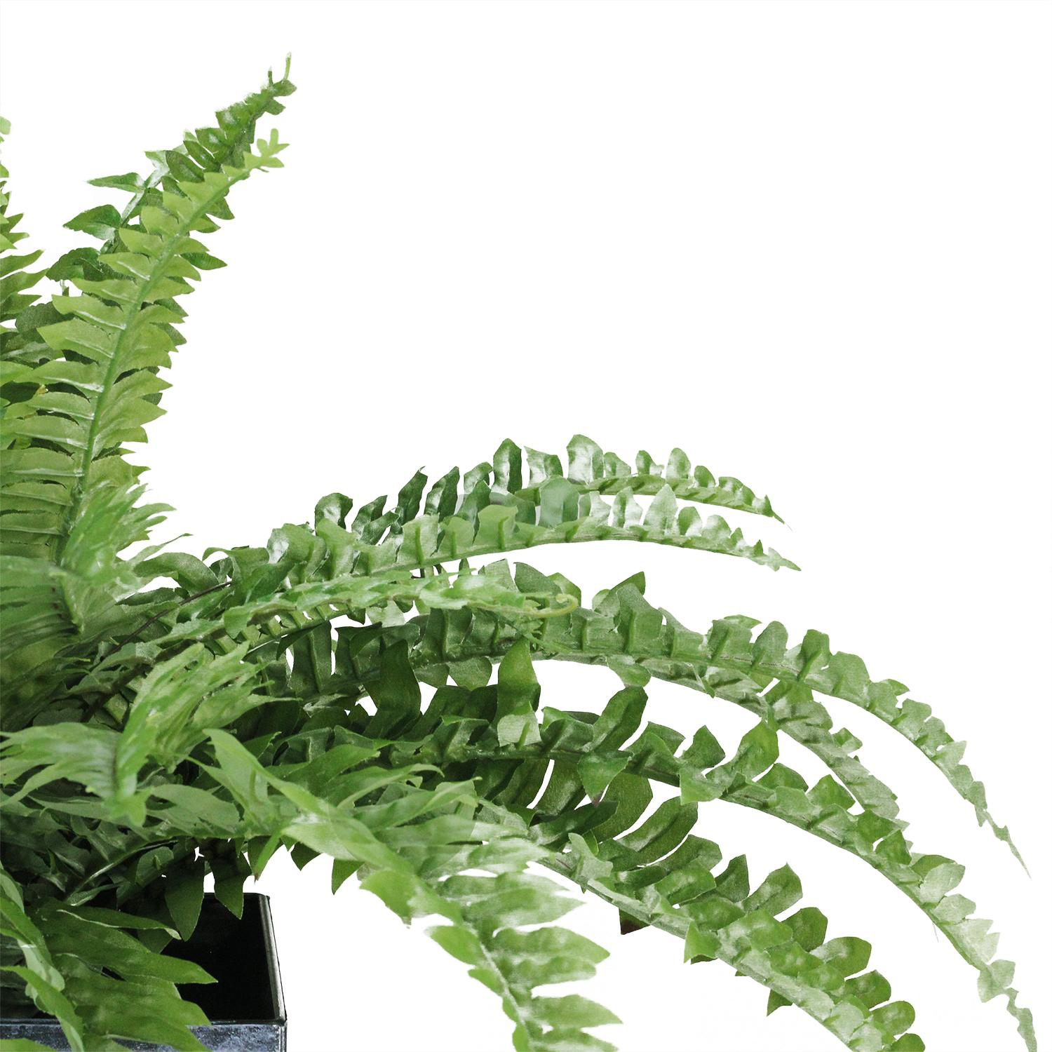 "variation thumbnail of 20"" Artificial Boston Fern in Decorative Distressed Square Black Tin Pot"