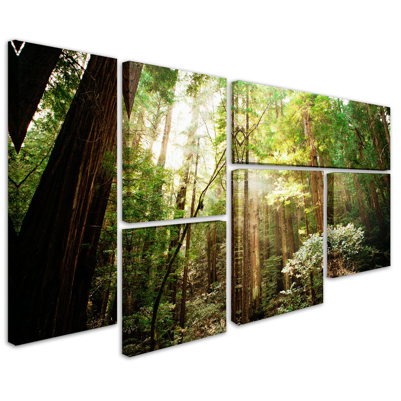 Muir Woods Wall Art Set of 6