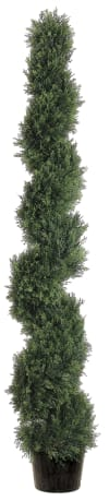 Spiral Cedar Potted Topiary