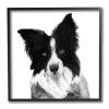 Border Collie Pet Dog Portrait Black White Black Framed Wall Art