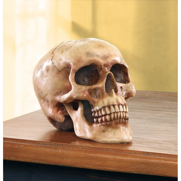 Grinning Highly Realistic Replica Human Skull Statue Home Décor