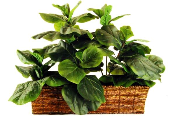 Fiddle-Leaf Fig Ledge Basket Silk Plant