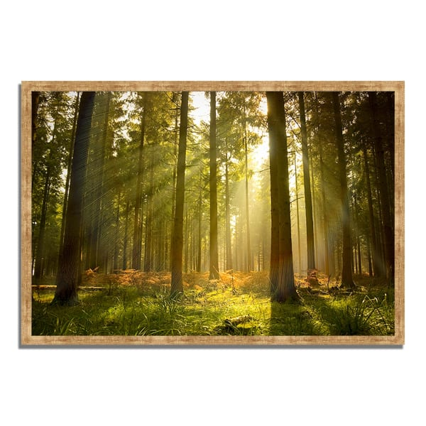Framed Photograph Print 38 In. x 26 In. Forest at Dusk Multi Color