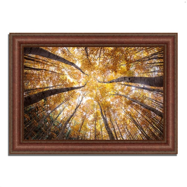 Framed Photograph Print 43 In. x 31 In. Reach For The Sky Multi Color