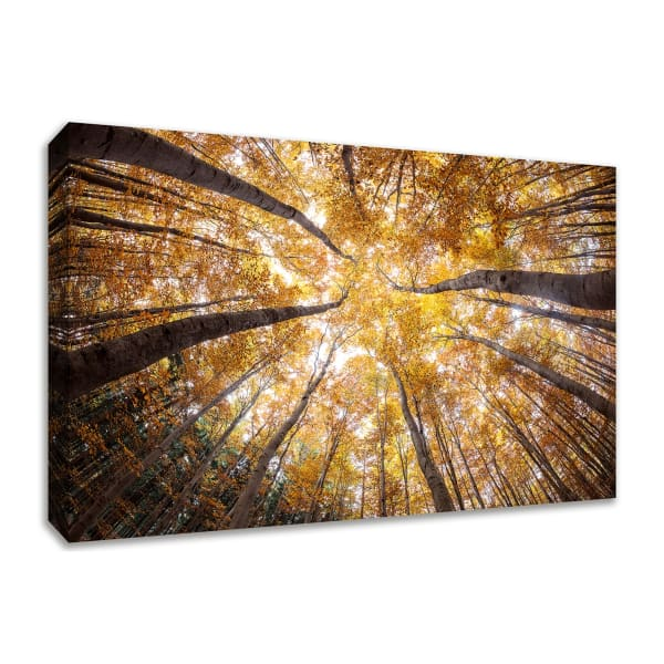 Fine Art Giclee Print on Gallery Wrap Canvas 45 In. x 30 In. Reach For The Sky Multi Color