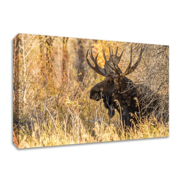 Fine Art Giclee Print on Gallery Wrap Canvas 36 In. x 24 In. Black Antler Moose Multi Color