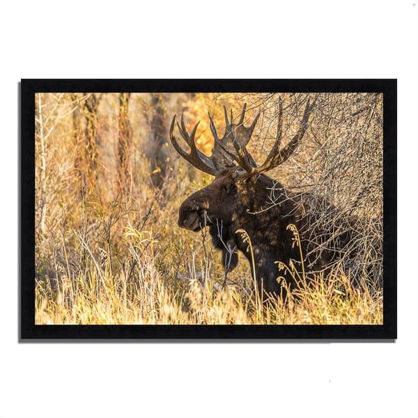 Framed Photograph Print 46 In. x 33 In. Black Antler Moose Multi Color