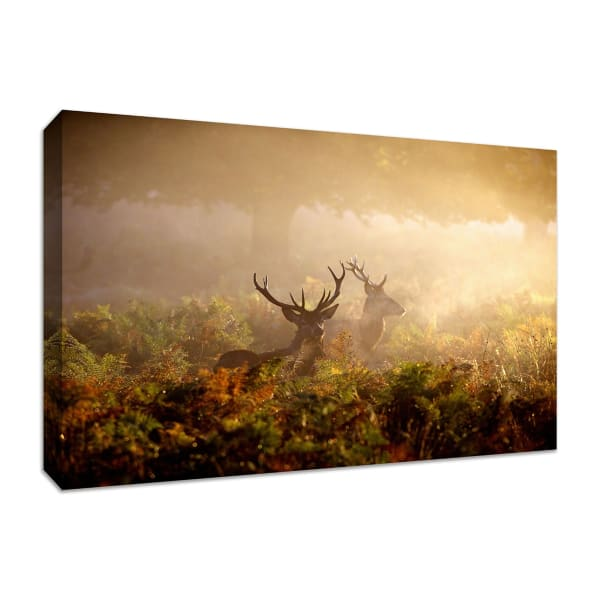 Fine Art Giclee Print on Gallery Wrap Canvas 45 In. x 30 In. Two Stags at Dawn Multi Color