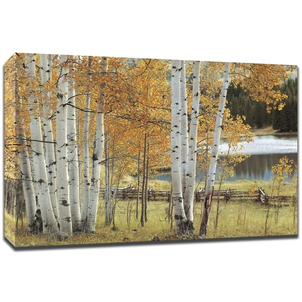Birch Beauty By Mike Jones, Fine Art Giclee Print on Gallery Wrap Canvas,