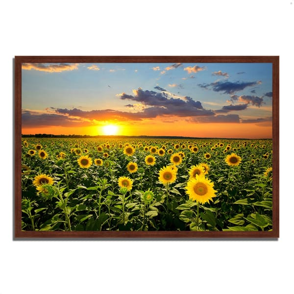 Framed Photograph Print 38 In. x 26 In. Sunflower Sunset Multi Color