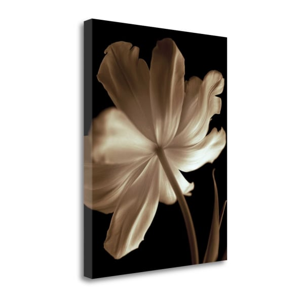 Fine Art Giclee Print on Gallery Wrap Canvas 18 In. x 23 In. Champagne Tulip II By Charles Britt Multi Color