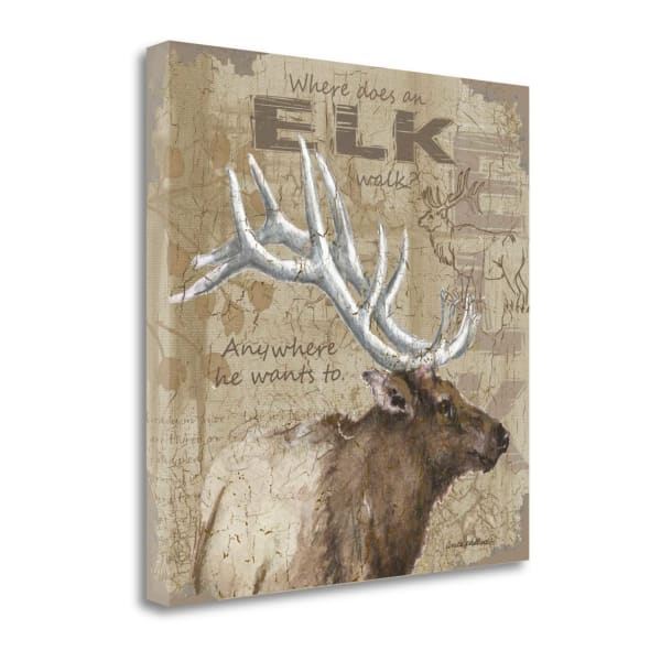 Where Does An Elk Walk By Anita Phillips Wrapped Canvas Wall Art