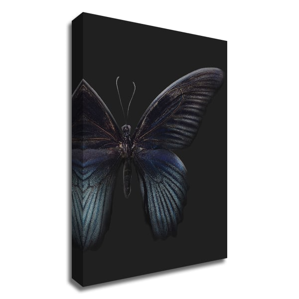 Black Butterfly on Grey by Design Fabrikken Wrapped Canvas Wall Art