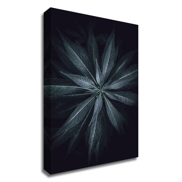 Star Flower by Design Fabrikken Wrapped Canvas Wall Art