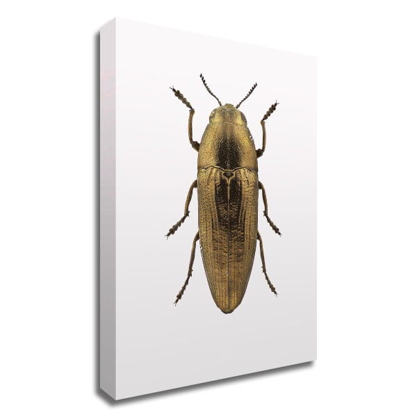 Beetle 4 by Design Fabrikken Wrapped Canvas Wall Art