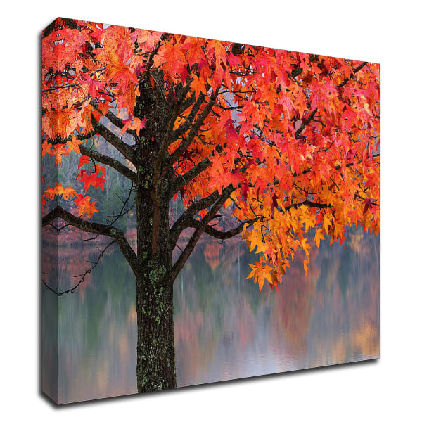 Sweet Gum by David Hammond Wrapped Canvas Wall Art