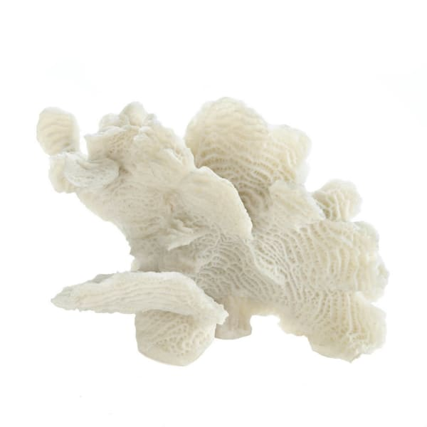 Large White Coral Tabletop Decor