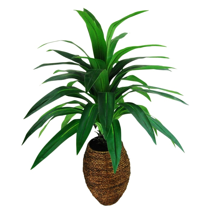 Yucca Palm in a Oval Basket Silk Plant