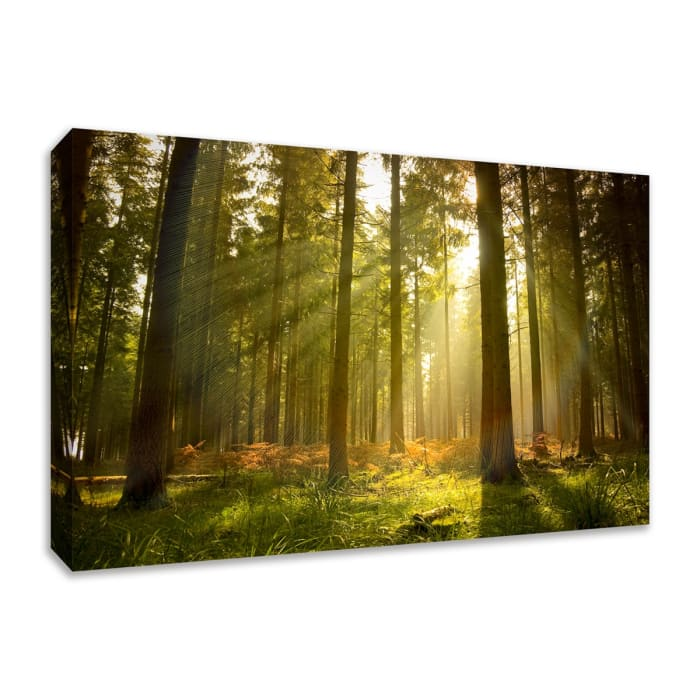 Fine Art Giclee Print on Gallery Wrap Canvas 30 In. x 20 In. Forest at Dusk Multi Color