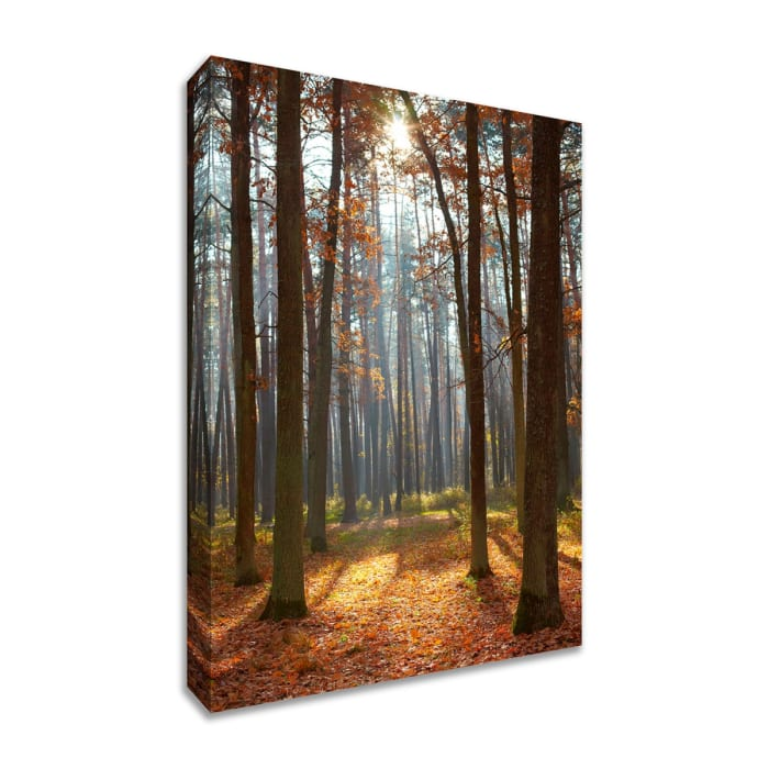Fine Art Giclee Print on Gallery Wrap Canvas 30 In. x 45 In. Autumn Forest Multi Color