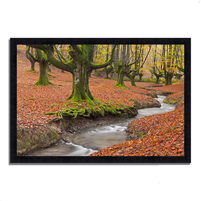 Framed Photograph Print 33 In. x 23 In. Otzarreta Beech On A Red Carpet Multi Color