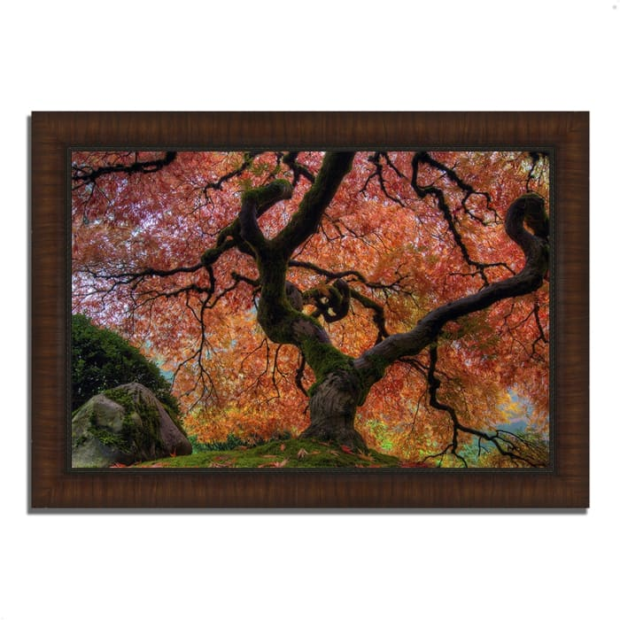 Framed Photograph Print 30 In. x 42 In. Japanese Maple in Autumn Multi Color